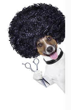 Dog Grooming Tucson Wags My Tail Pet Grooming